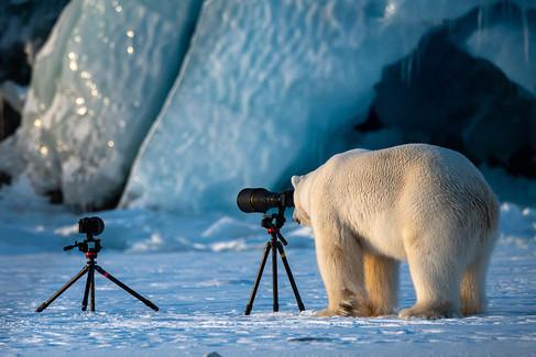 Foto van Dit zijn de grappigste dierenfoto's van 2018