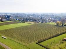 Stichting Anima Mundi overweegt gang naar de rechter na afschieten kunstwerk langs dijk in Winssen