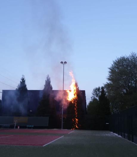 Hoge coniferen naast sporthal De Bongerd in Bemmel in brand gestoken