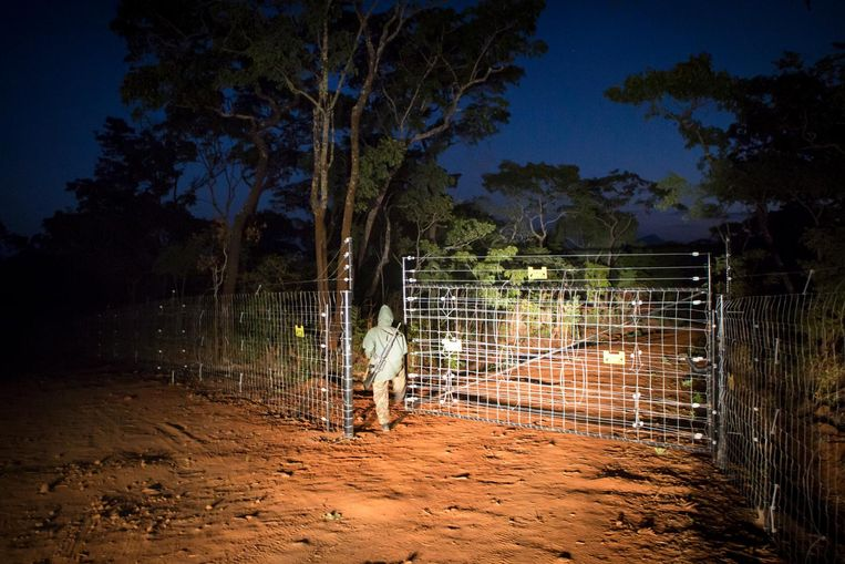 Een ranger opent het elektrische hek van het Nkhotakota Wildlife Park, waar de olifanten vrijgelaten worden. Beeld Julius Schrank