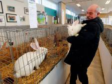 Hokken vol kolossale konijnen bij Eindhovense konijnenshow