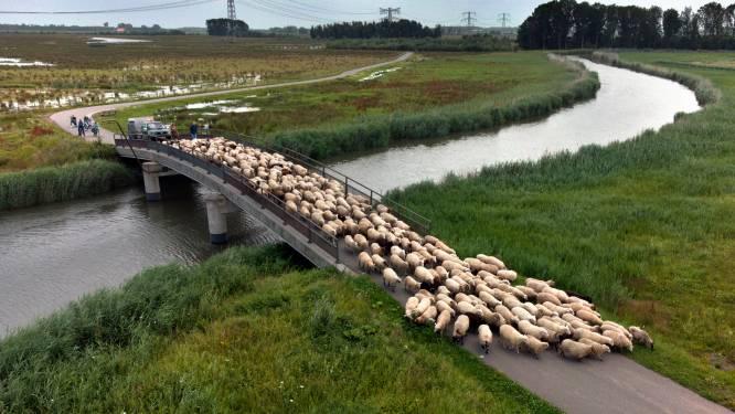 Hoogwater in Altena: waterschap zet zondag dijkbewakers in