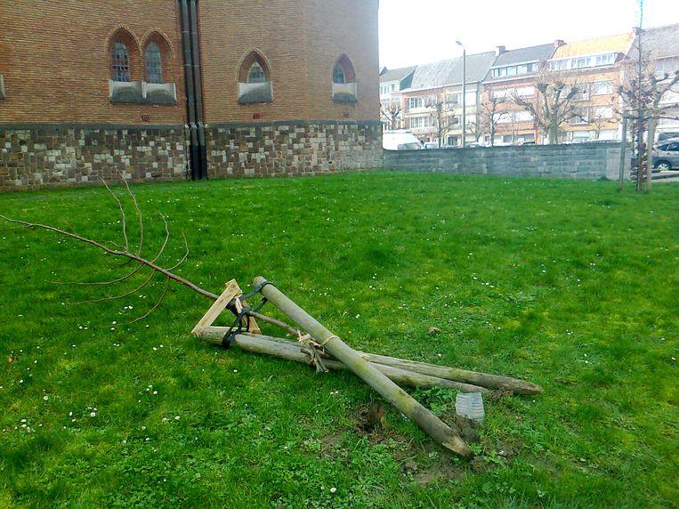 Een jong boompje werd onlangs uitgerukt na een fuif in Bevegem.