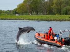 Dolfijn Zafar ondanks bevrijding dood gevonden op strand Wijk aan Zee