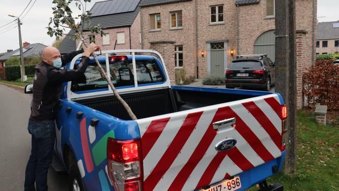 Actie 1.001 bomen groot succes: gezinnen uit zes gemeenten bestellen 4.509 bomen met Lille als beste leerling van de klas