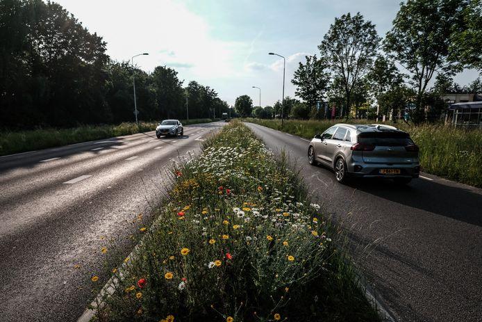 Steeds meer bermen, zoals deze middenberm op de Liemersweg in Doetinchem, staan vol met bloemen.