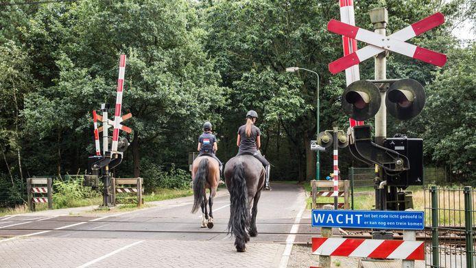 Deze paarden steken zonder problemen over, maar afgelopen donderdag ging het met een groep andere ruiters bijna mis.