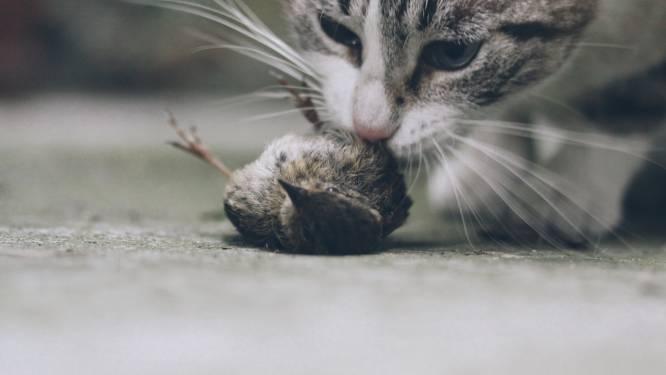 """Stadsecoloog komt met bizar voorstel: """"Geef katten een avondklok om vogels te beschermen"""""""