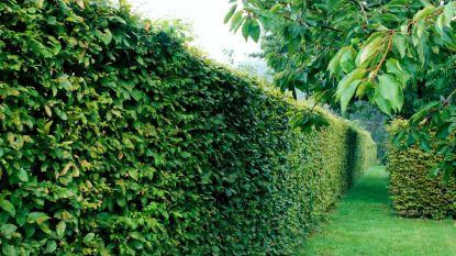 Inwoners kunnen plantenpakket Behaagactie afhalen