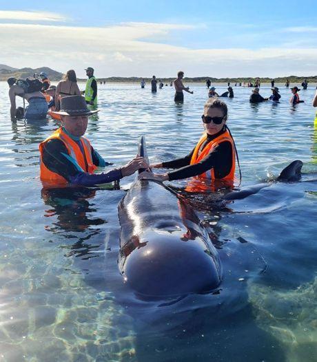 Weer groep walvissen gestrand bij berucht kustgebied in Nieuw-Zeeland