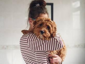 Gescheiden stel in Spanje krijgt gedeelde voogdij over hond