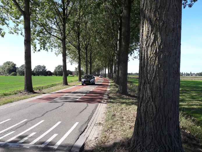 Ook na de bomenkap blijft het 'laangehalte' van de Elsenpas in Beuningen behouden.