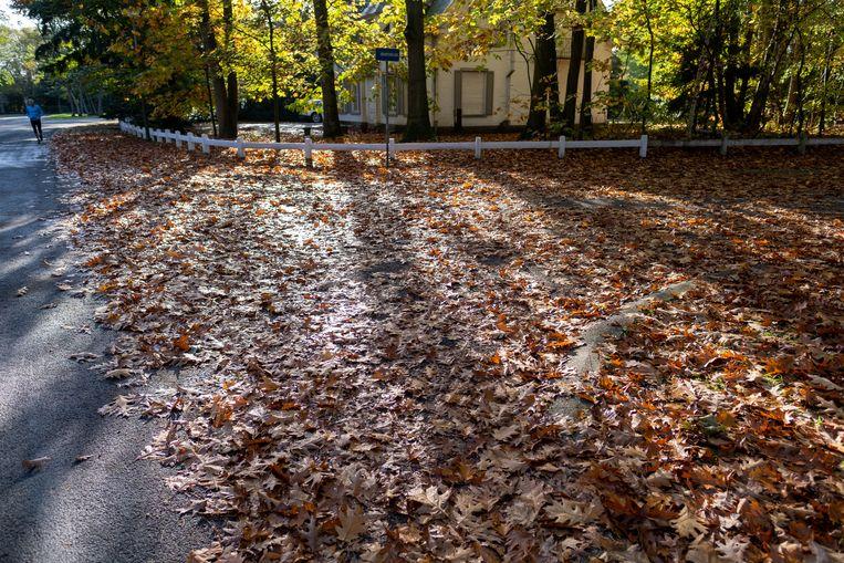 Herfstbladeren in de Kleine Heidelaan.