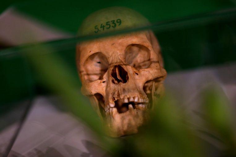 Eén van de schedels van mensen uit de Nama- en Herero-volkeren die tijdens een ceremonie in Belijn in 2018 werden teruggeven aan Namibië. De menselijke resten zijn van slachtoffers van het Duitse koloniale geweld tussen 1904 en 1908. Beeld Reuters