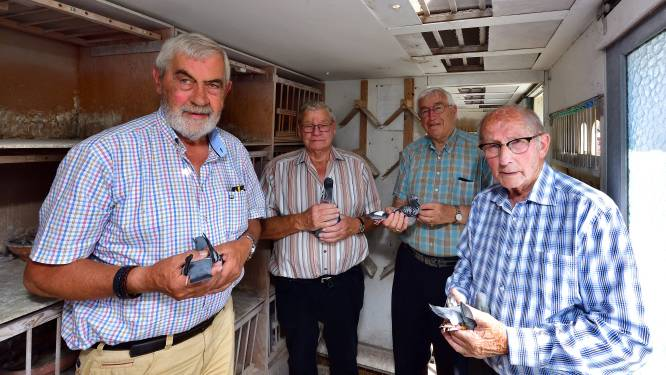 De Vredesduif vliegt al 75 jaar mee: 'Ooit had ik één postduif, nu zeventig'