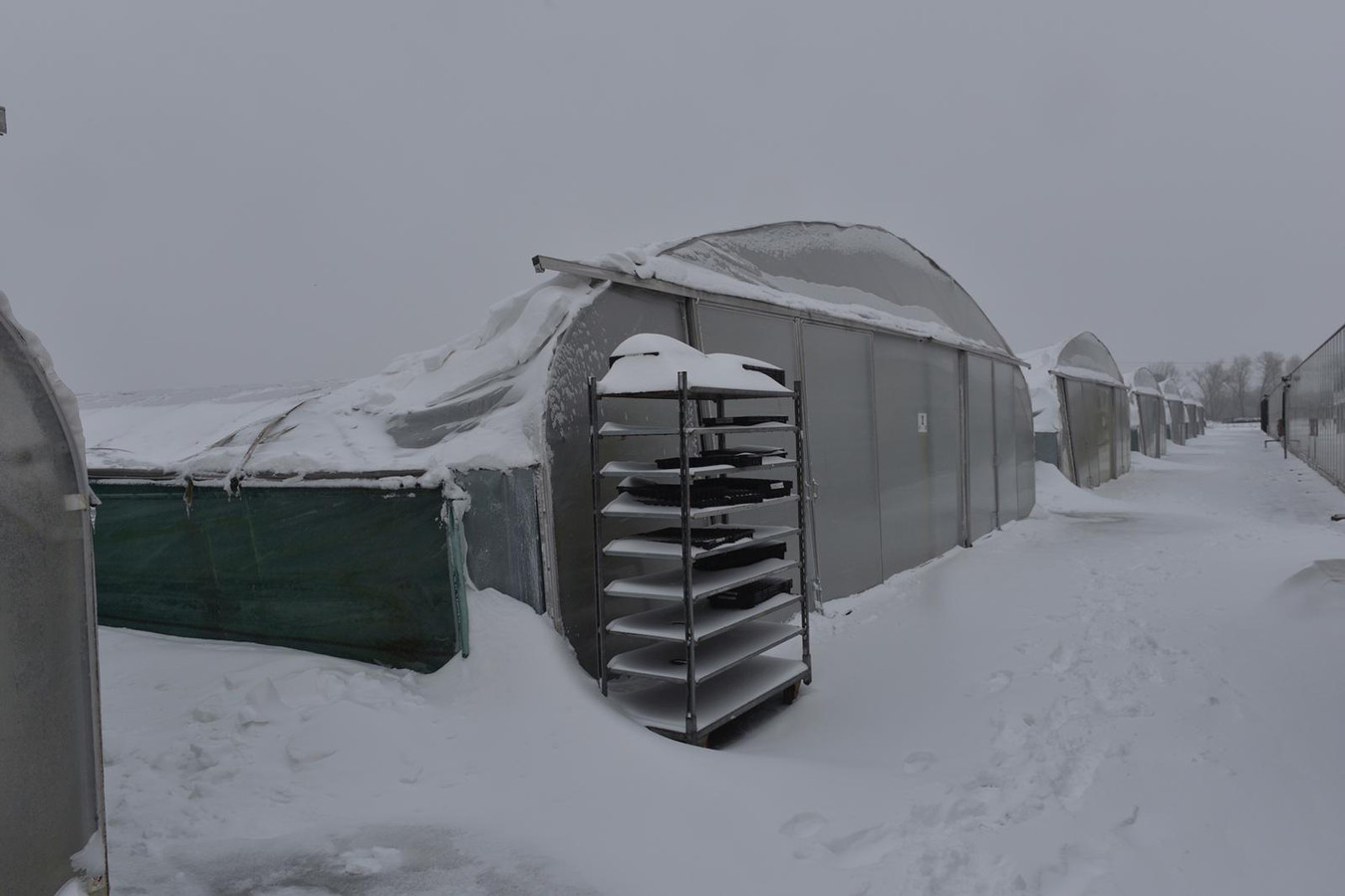 De tunnels van de Ergon kwekerij op Bokt zijn ingestort onder het dikke pak sneeuw.