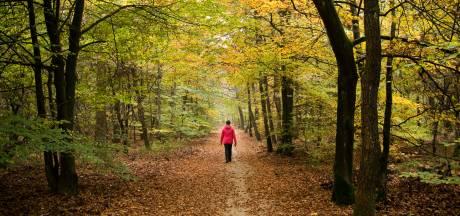 Deel Veluwe vaker op slot voor wandelaars en fietsers: 'Natuur heeft rust nodig'