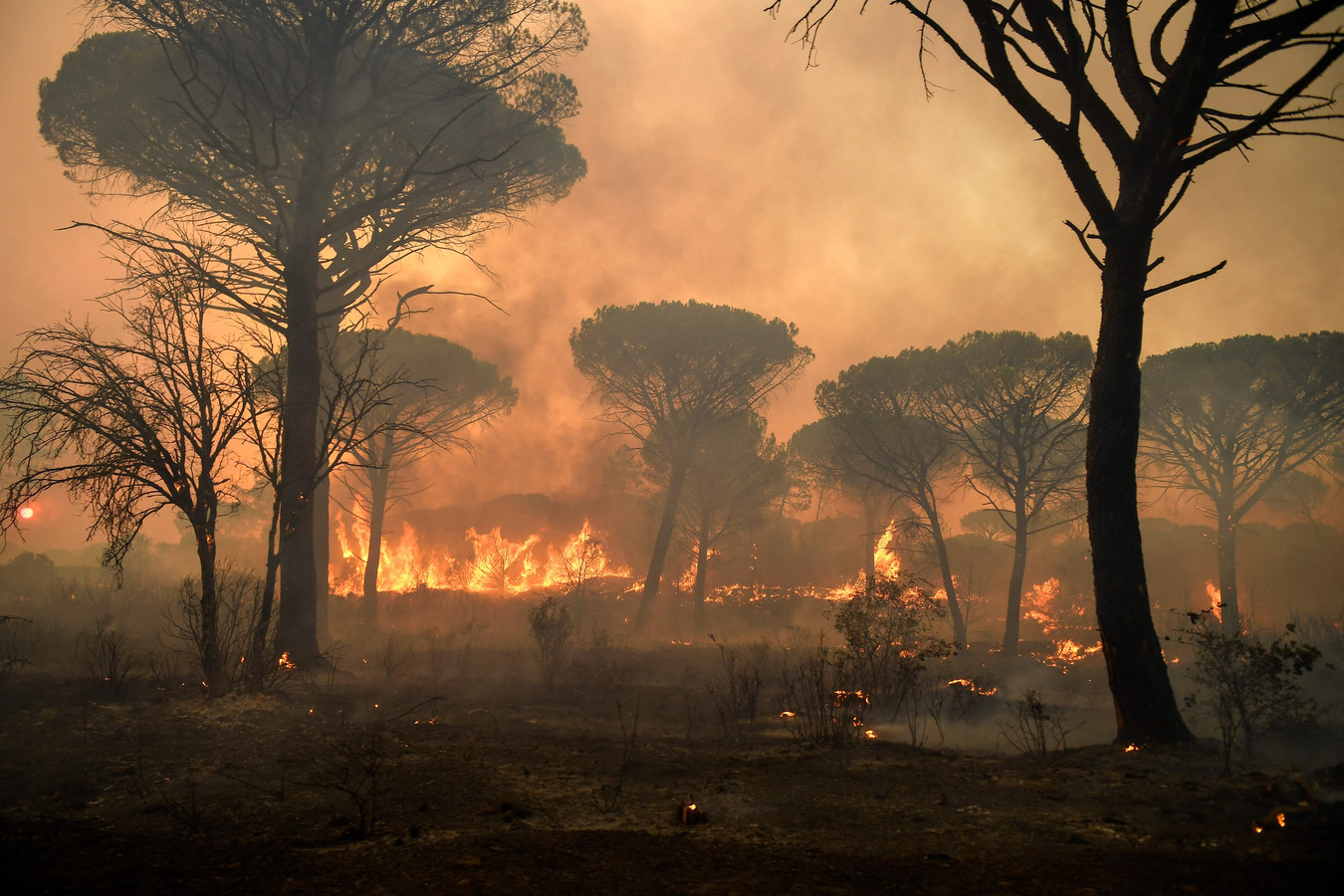Een grote bosbrand nabij Gonfaron in de Var