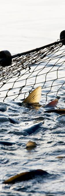 La pêche électrique interdite dans les eaux belges