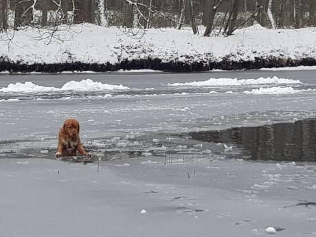 Hond zakt door het ijs, schaatsbaan De Bilt houdt het voor gezien