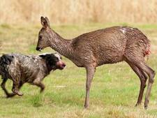Boswachters worden horendol van loslopende honden