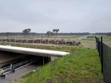 Asfalt op Harderwijkerweg wordt vervangen, weg tussen Otterlo en Arnhem dicht