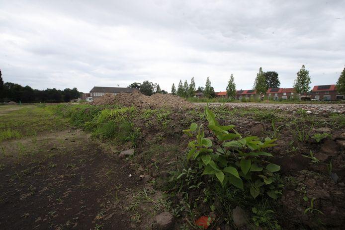 De Japanse duizendknoop is opgedoken op een bouwterrein in Deurne.