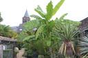 In de schaduw van de kerktoren van Mere vind je achter bloemenzaak Acanthus een verborgen exotische tuin.