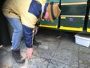 Kees Koenders raapt wat dode bijen op in zijn bijenstal aan Zevenhuis in Zeeland