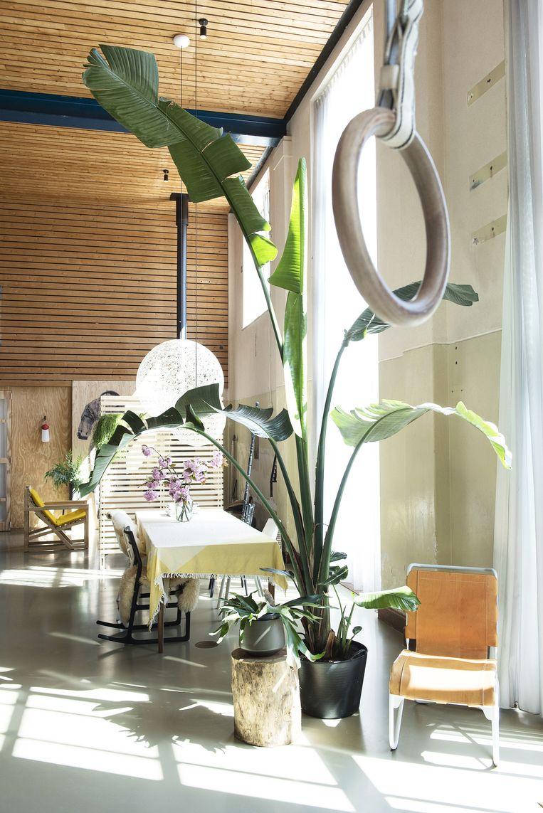 'Planten zijn belangrijk in huis. Ze breken de hoogte en werken mooi samen met het licht. Groen brengt bovendien rust in het interieur.' Beeld Els Zweerink