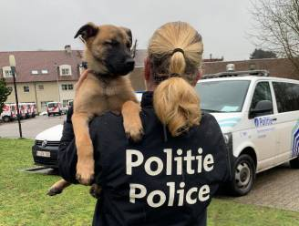 Drugshond van Leuvense politie vat vijf personen