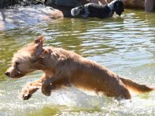 Honden zoeken verkoeling in Oeffeltse zwemvijver