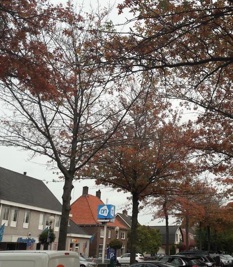 Bomen op 't Dorp Heesch mogen nog hopen