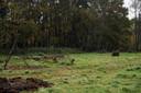 Ann De Belder (61) bouwt voedselbos in Keerbergen met eetbare planten en kruiden