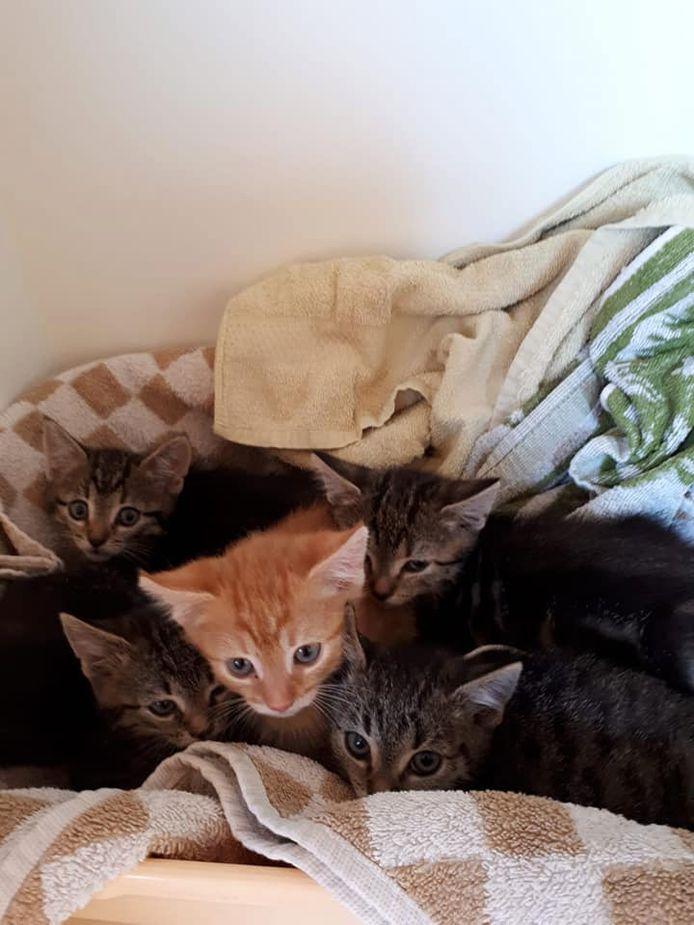 De vijf gedumpte kittens in Abcoude.