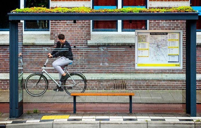 In Utrecht hebben de bushokjes al langer planten op het dak.