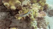 Dramatisch verlies van koraal in Zuid-Chinese Zee