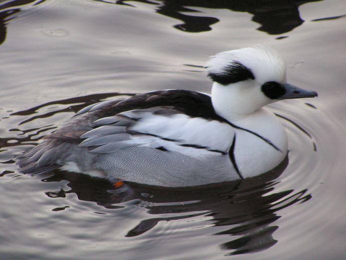 Een speciale watervogel.