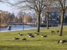 Ganzenoverlast Stadshagen maakt van boulevard winkelcentrum geen visitekaartje