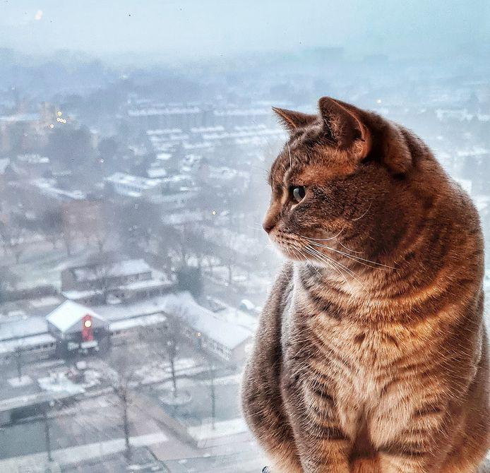 Molly zit voor het raam en kijkt uit over besneeuwd Amersfoort vanaf de 19de verdieping van Cadenza, de woontoren op de hoek van de Hogeweg en het Valleikanaal.