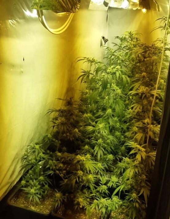 Meer wietplanten.