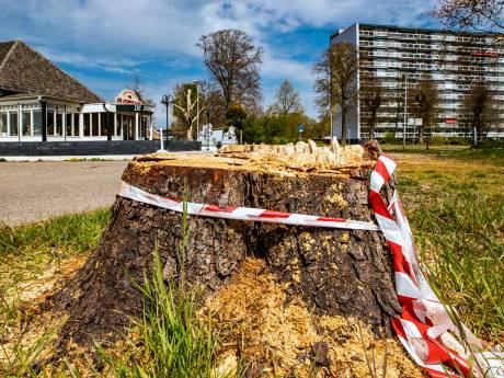 Eigenaar De Zomertuin in Deventer weet nog niet of hij straf krijgt na vellen van iconische kastanje