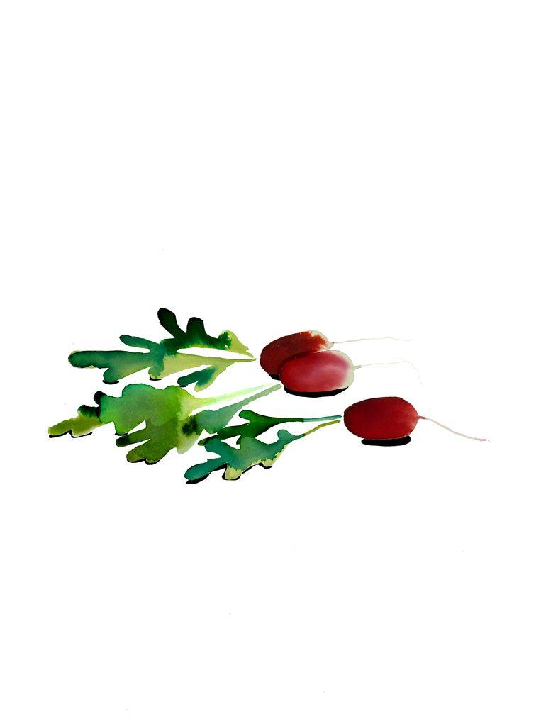 Samuel Levie gebruikt deze week radijs als hoofdingrediënt. Beeld Emma Levie