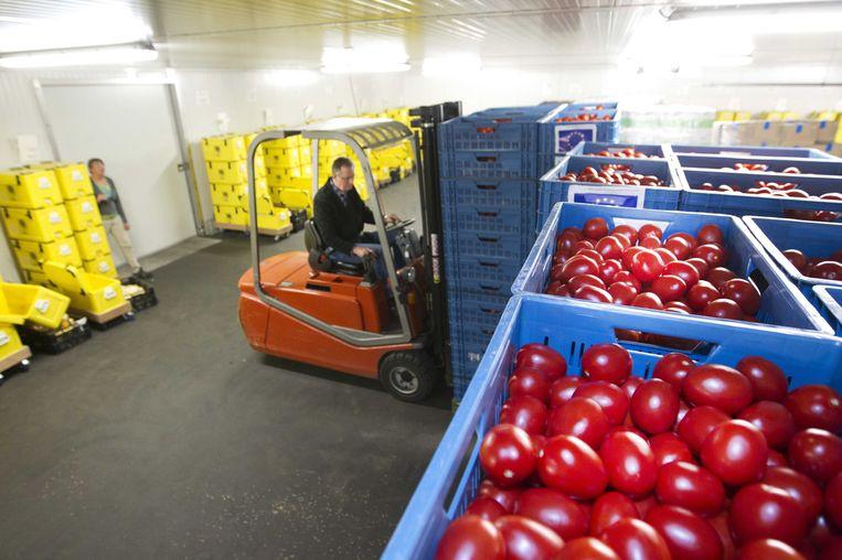 Tomaten komen aan bij de voedselbank in Arnhem. Beeld null