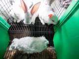L214 diffuse une vidéo sur l'élevage des lapins en cage