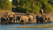 Olifantenparadijs verklaart slurfdier vogelvrij