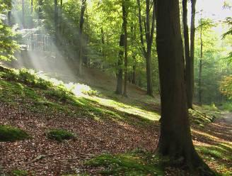 Ecoduct ontdekken of de mooiste bomen van de wereld bewonderen? Tal van activiteiten op Dag van het Zoniënwoud