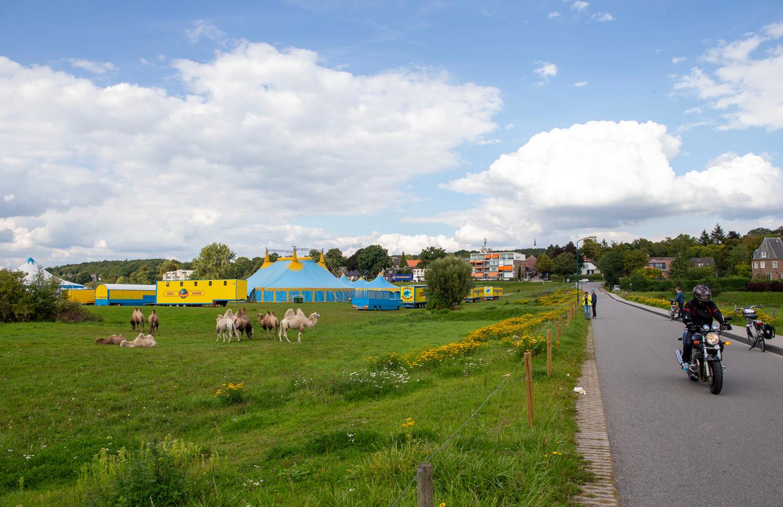 Een circustent en kamelen op de Veerweide van Rhenen.