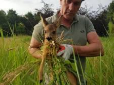Jagersclub redt reekalfjes van wisse dood in de grasmaaier
