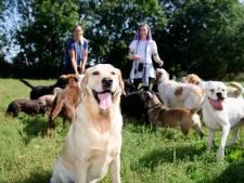 Telefoon hondenuitlaatservice roodgloeiend: 'Mensen die nu nog bellen, moeten iets anders vinden'
